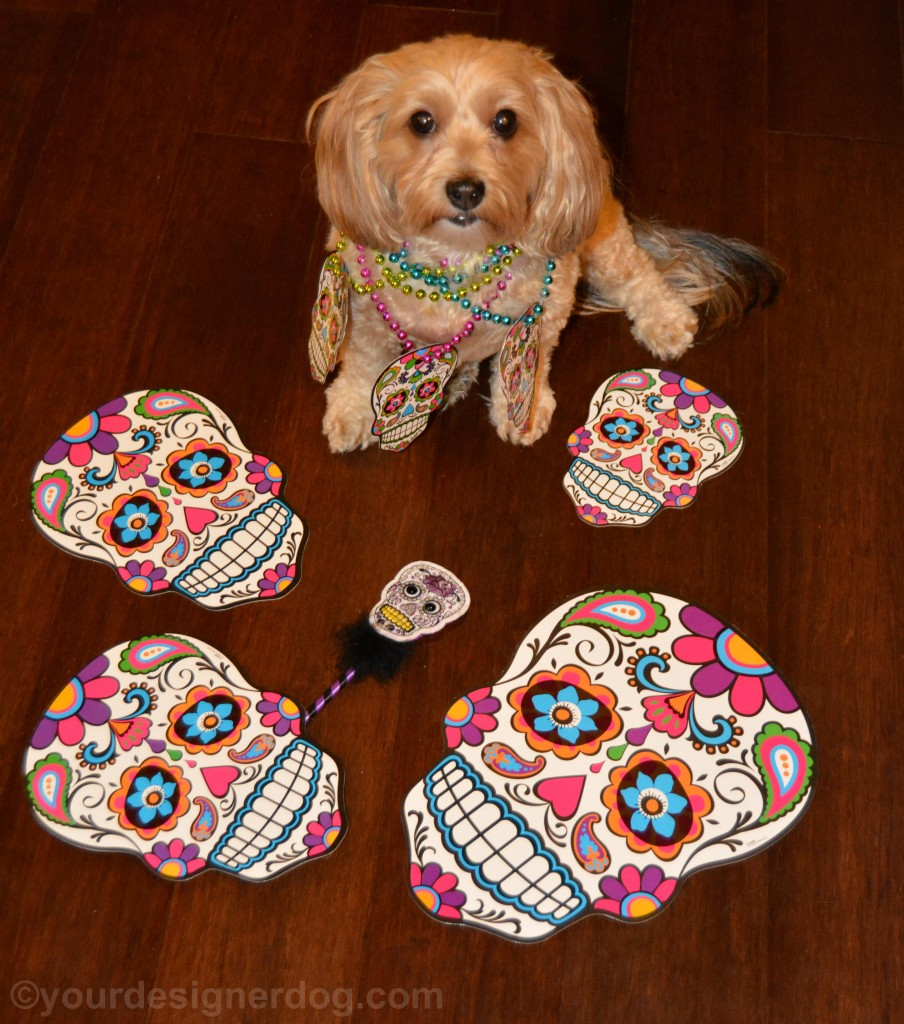 dogs, designer dogs, yorkipoo, yorkie poo, skulls, day of the dead