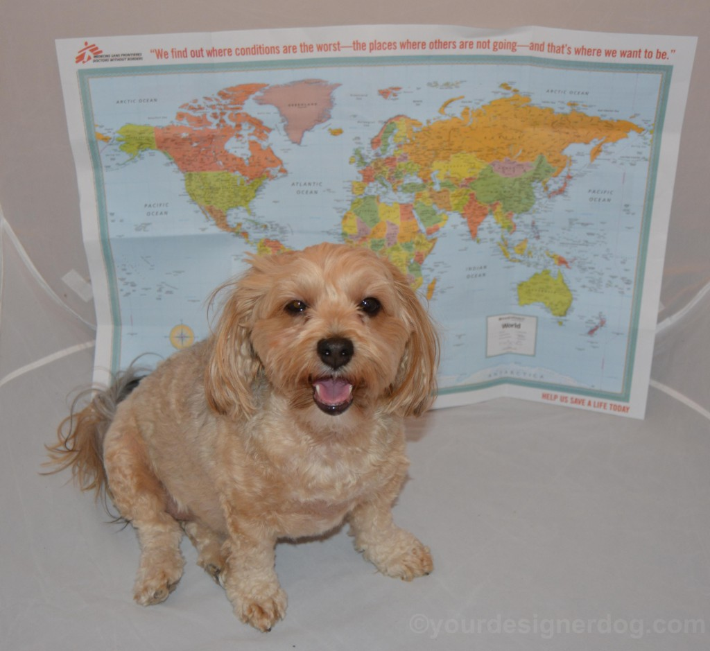 dogs, designer dogs, yorkipoo, yorkie poo, map, world