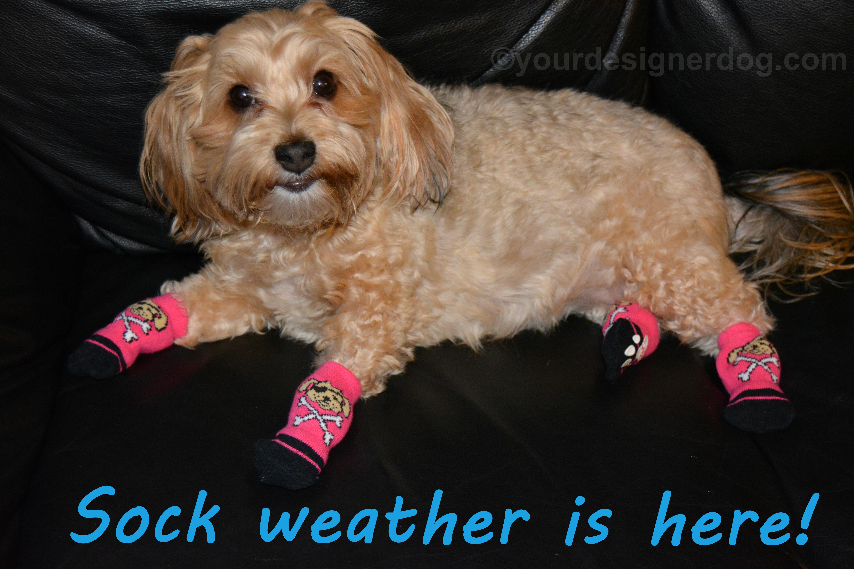 Socks Weather