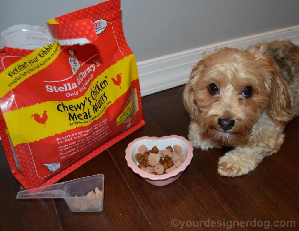 dogs, designer dogs, yorkipoo, yorkie poo, stella & chewy's, meal mixers, raw food, kibble