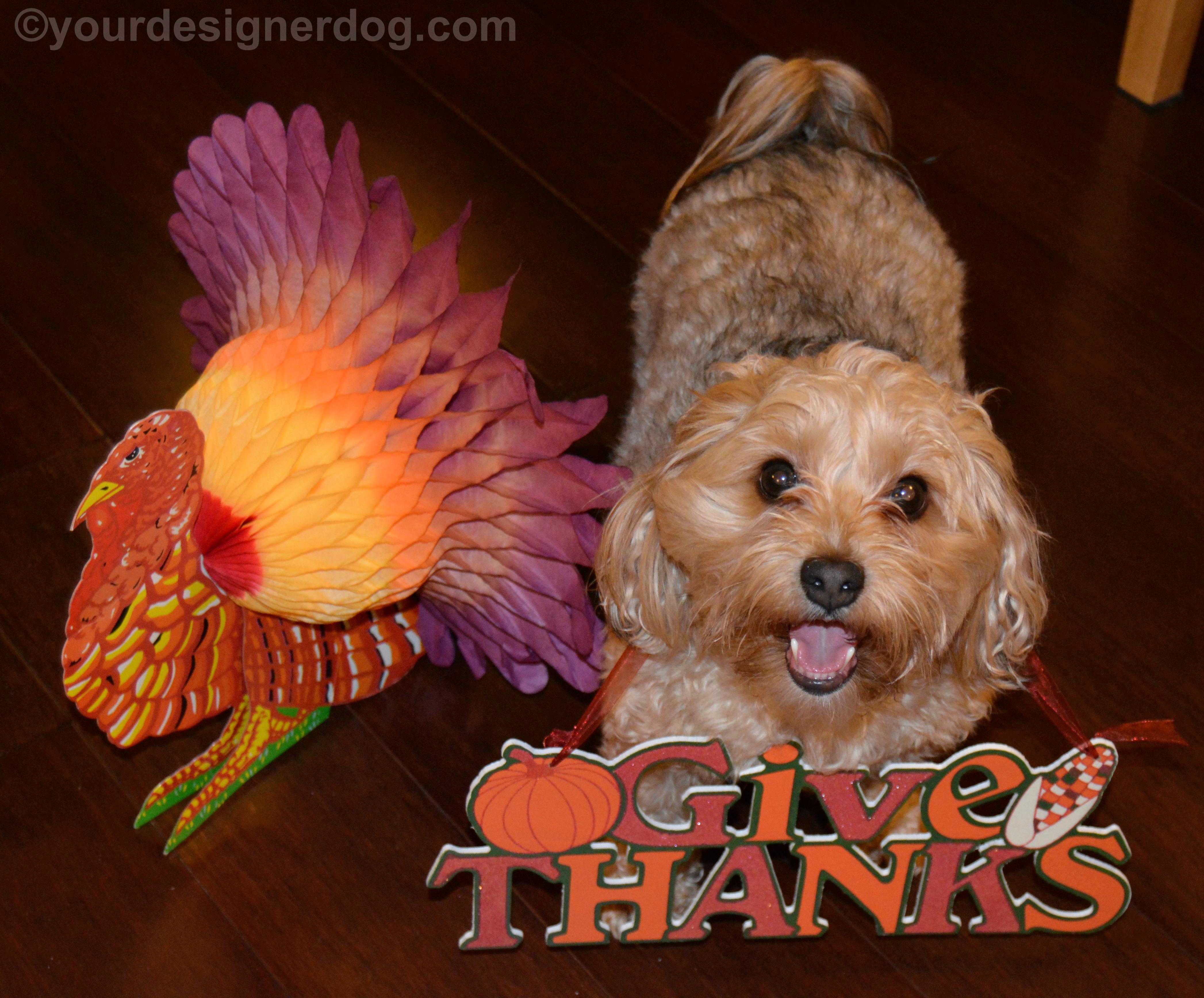 Thankful – #52Snapshots