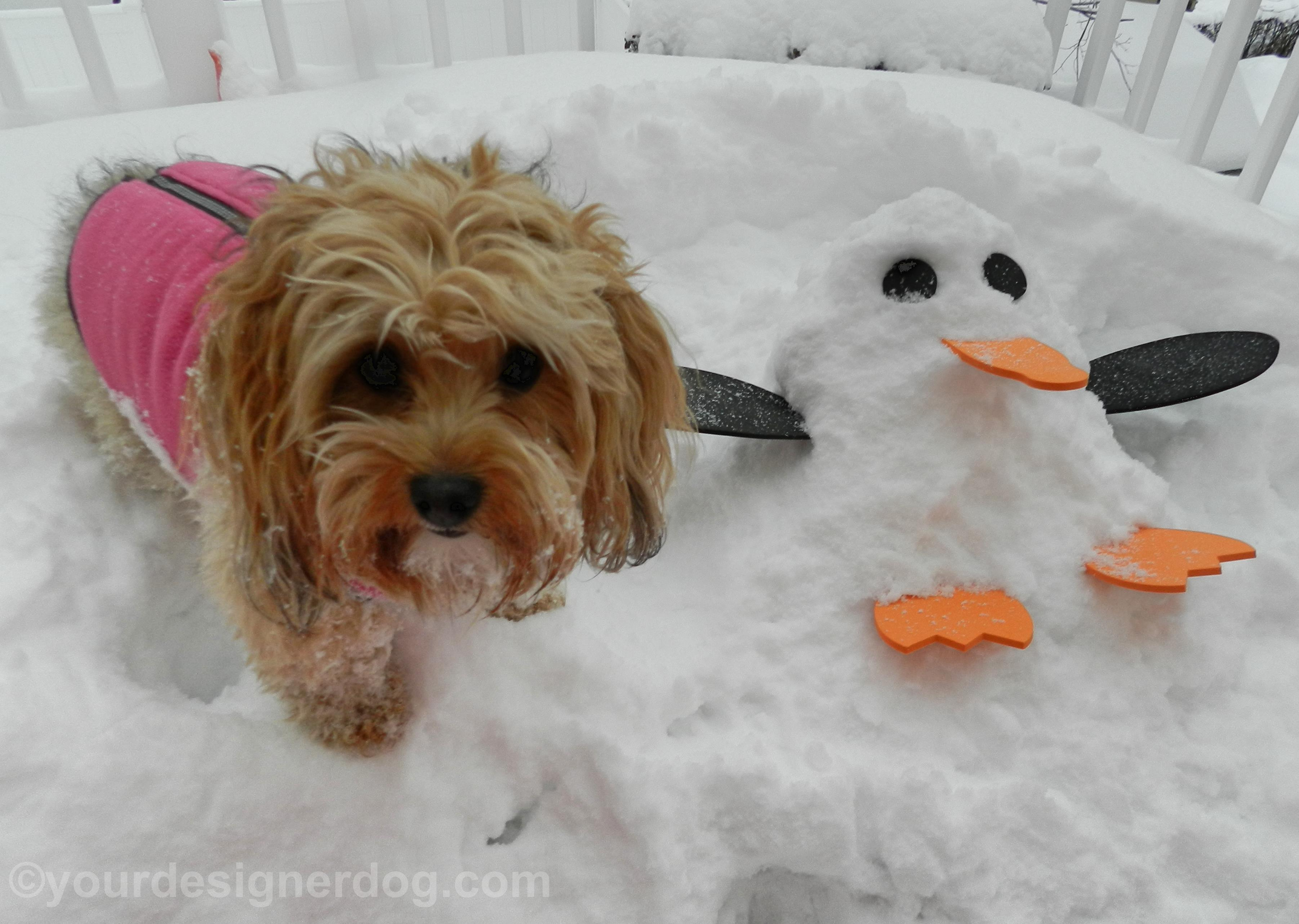 Sadie and the Snow Penguin