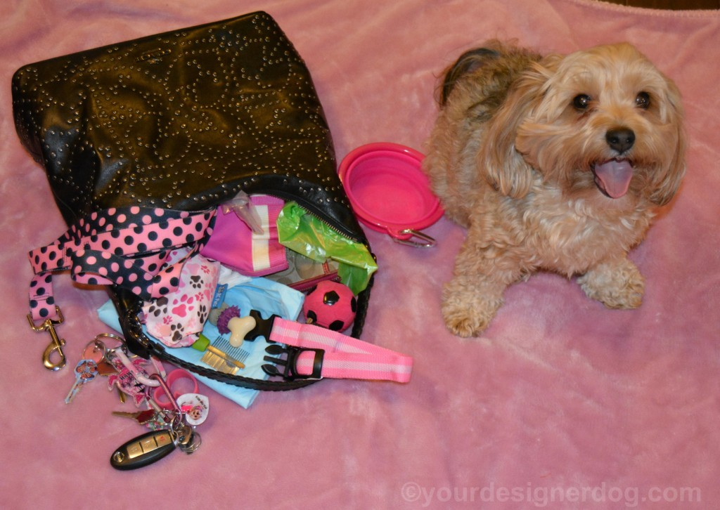 dogs, designer dogs, yorkipoo, yorkie poo, purse, Dog Mom