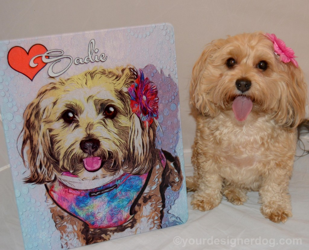 dogs, designer dogs, yorkipoo, yorkie poo, portrait, andys paw prints, tongue out, art, review