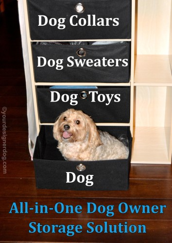 dogs, designer dogs, yorkipoo, yorkie poo, dog storage, storage furniture, dog smiling, tongue out