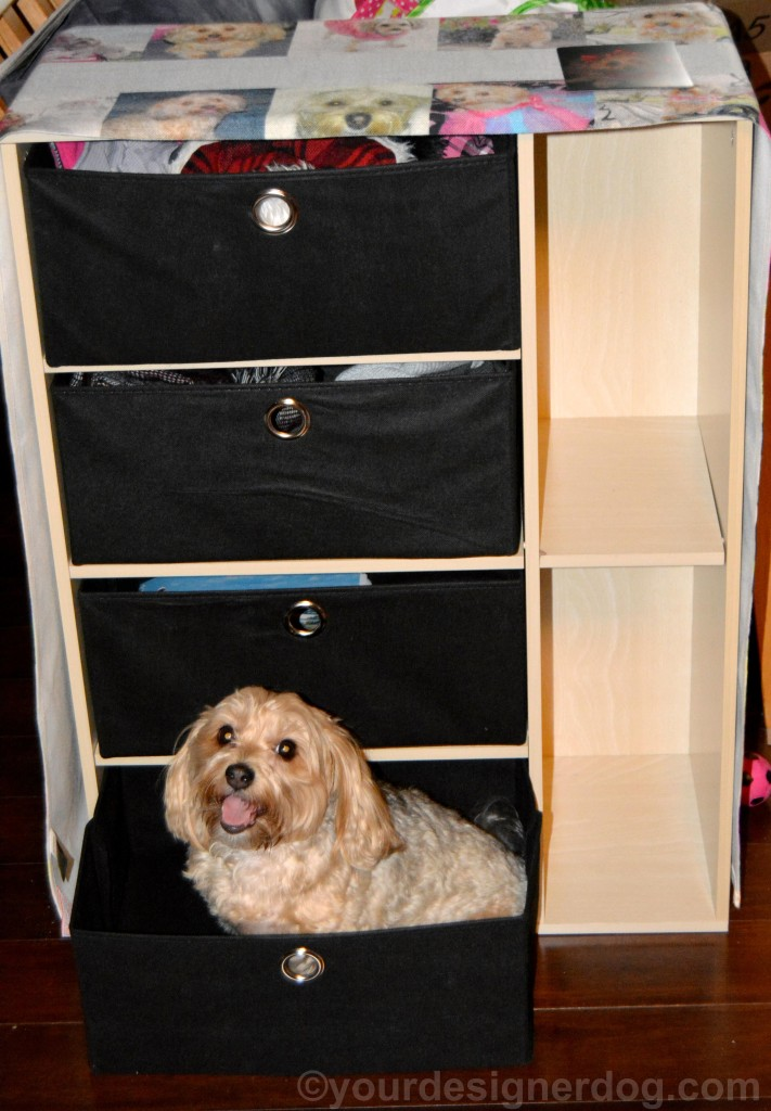 dogs, designer dogs, yorkipoo, yorkie poo, dog storage, storage furniture, dog smiling, tongue out