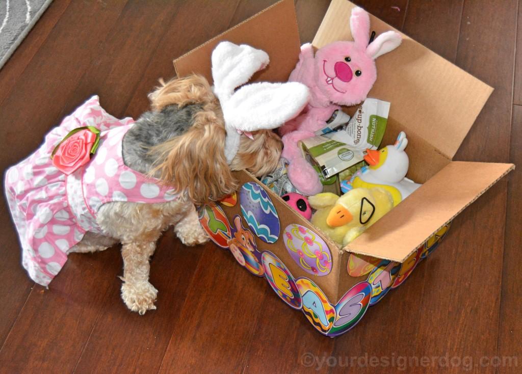 dogs, designer dogs, yorkipoo, yorkie poo, easter, dog easyer basket, DIY easter basket