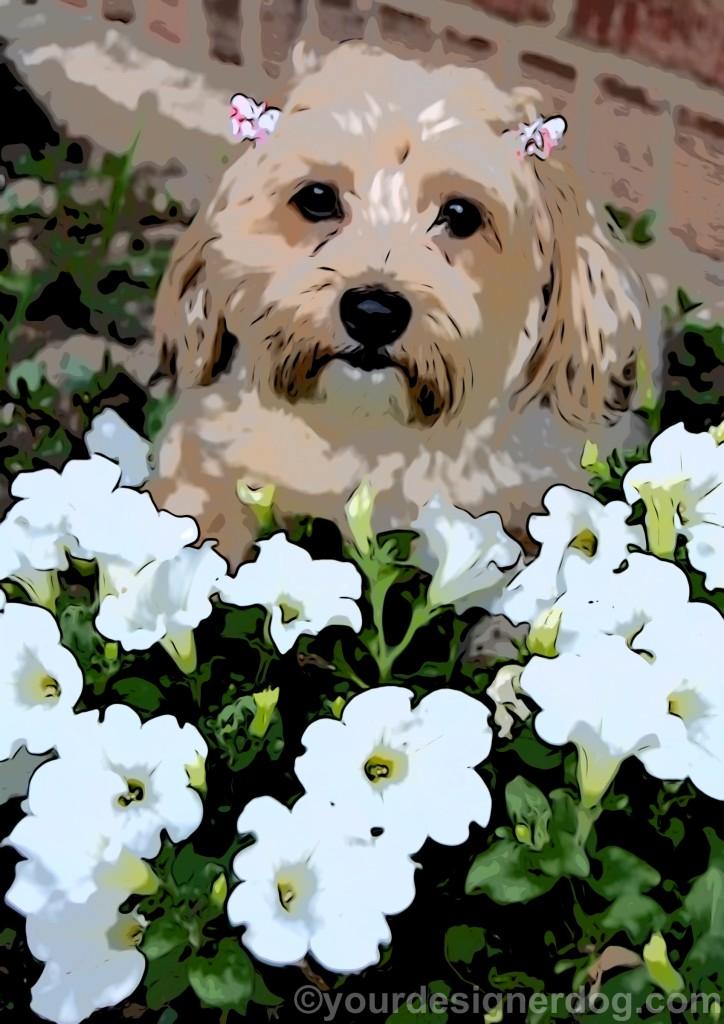 dogs, designer dogs, yorkipoo, yorkie poo, art, spring flowers