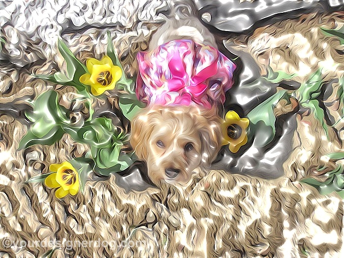 dogs, designer dogs, Yorkipoo, yorkie poo, art, dogs with flowers