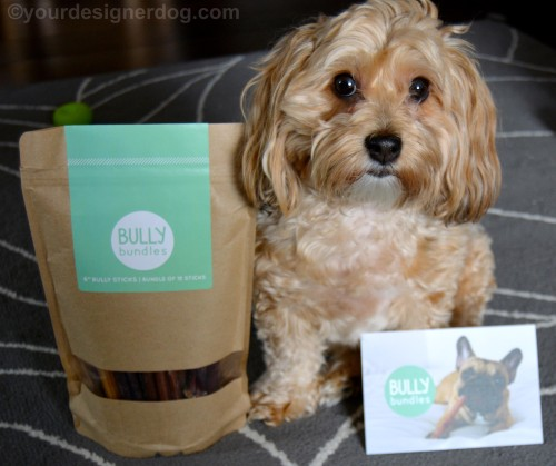 dogs, designer dogs, Yorkipoo, yorkie poo, bully sticks, dog chew, subscription service, Bully Bundles, dog teeat