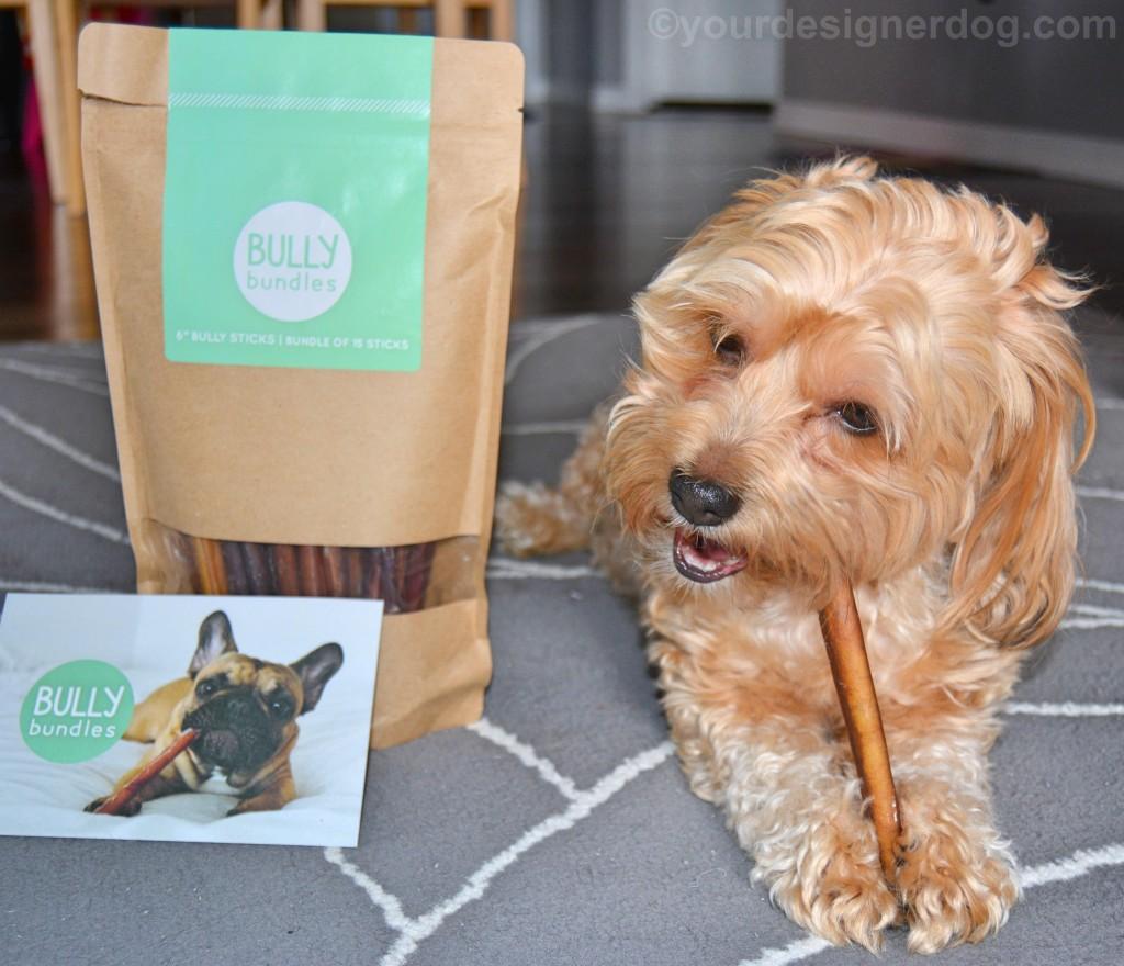 dogs, designer dogs, Yorkipoo, yorkie poo, bully sticks, dog chew, subscription service, Bully Bundles, dog treat