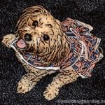 dogs, designer dogs, Yorkipoo, yorkie poo, dog smiling, dog dress, digital art, patriotic, flags