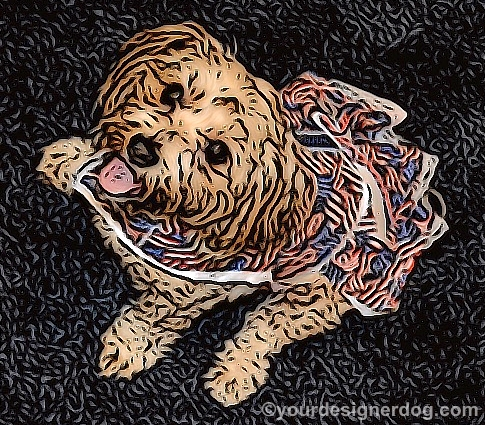 dogs, designer dogs, Yorkipoo, yorkie poo, dog smiling, dog dress, digital art, patriotic, flags