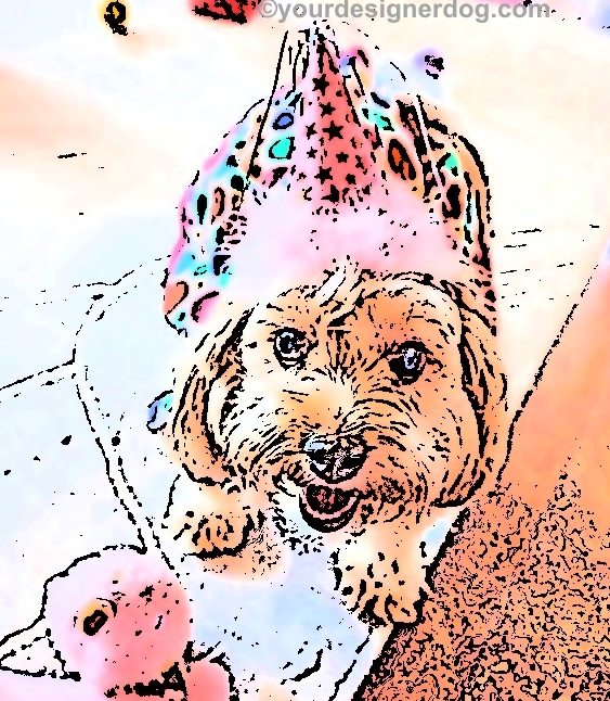 dogs, designer dogs, Yorkipoo, yorkie poo, digital art, pet portrait, dog birthday