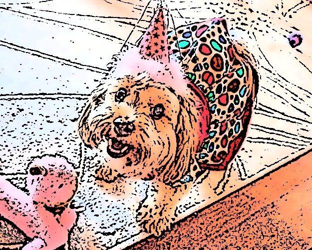 dogs, designer dogs, Yorkipoo, yorkie poo, digital art, pet portrait, dog birthday