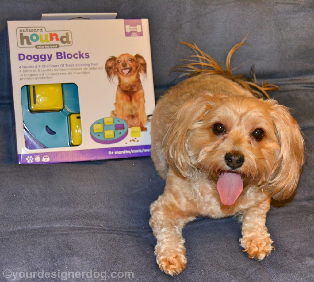 dogs, designer dogs, Yorkipoo, yorkie poo, puzzle, treat dispensing, dog toy