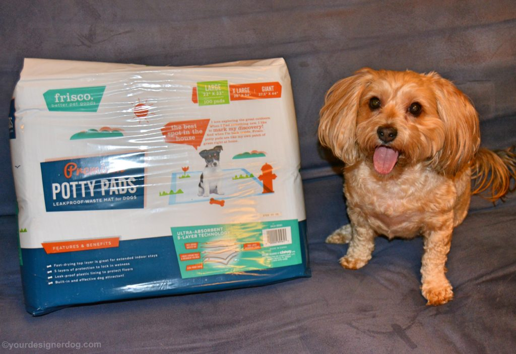 dogs, designer dogs, Yorkipoo, yorkie poo, potty pad, puppy pad, wee wee pad, frisco, chewy.com