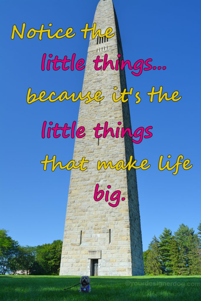 dogs, designer dogs, Yorkipoo, yorkie poo, little thing in life, monument