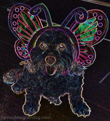 dogs, designer dogs, Yorkipoo, yorkie poo, digital art, pet portrait, butterfly