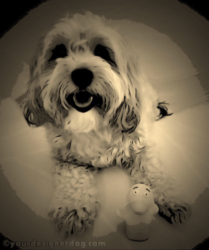 dogs, designer dogs, Yorkipoo, yorkie poo, digital art, sepia photography, pet portrait, rubber ducky