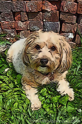 dogs, designer dogs, Yorkipoo, yorkie poo, digital art, pet portrait, bricks