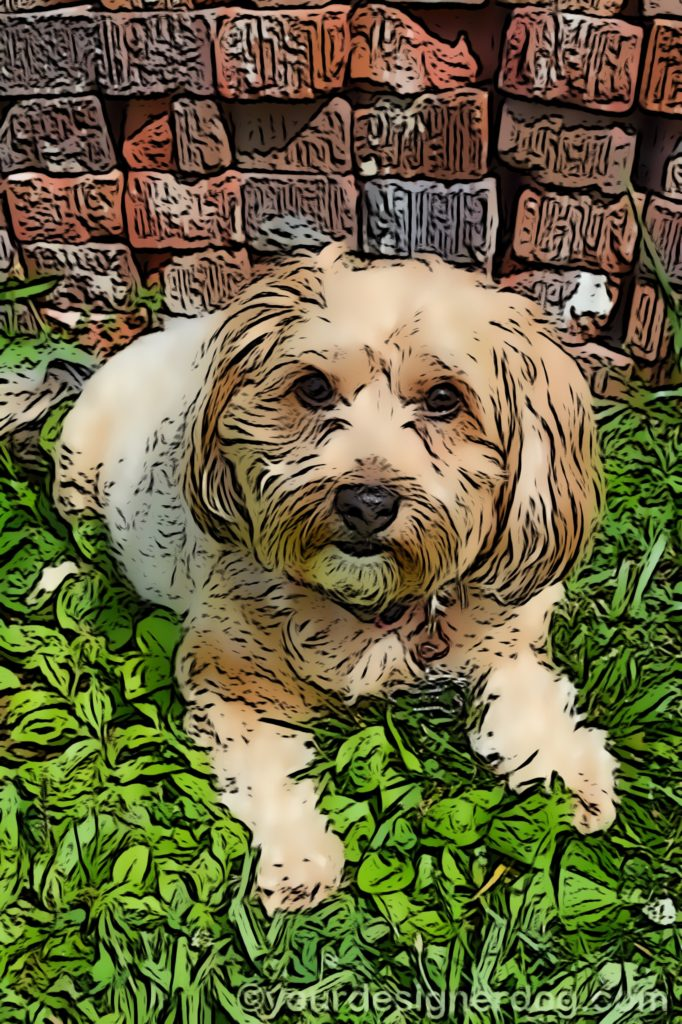dogs, designer dogs, Yorkipoo, yorkie poo, digital art, pet portrait, bricks