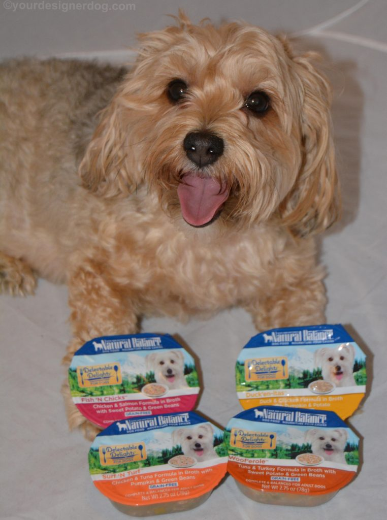 dogs, designer dogs, Yorkipoo, yorkie poo, dog food, natural balance, delectable Delights
