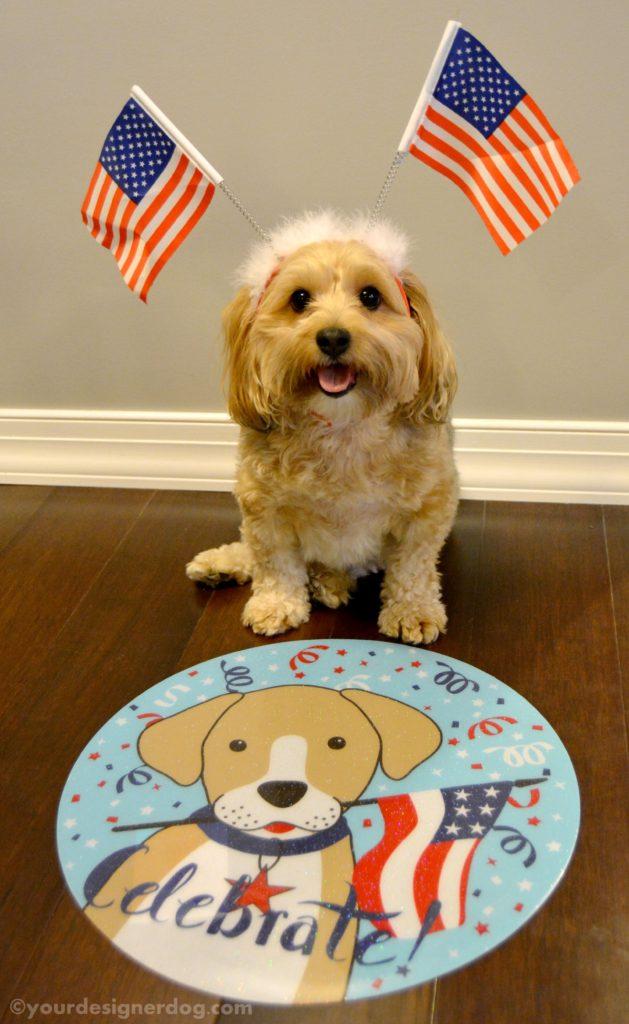 dogs, designer dogs, Yorkipoo, yorkie poo, flag, patriotic, america