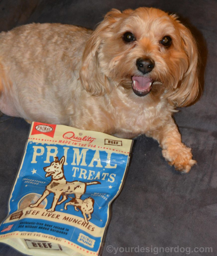 dogs, designer dogs, Yorkipoo, yorkie poo, dog treats, beef liver, chewy.com, primal treats