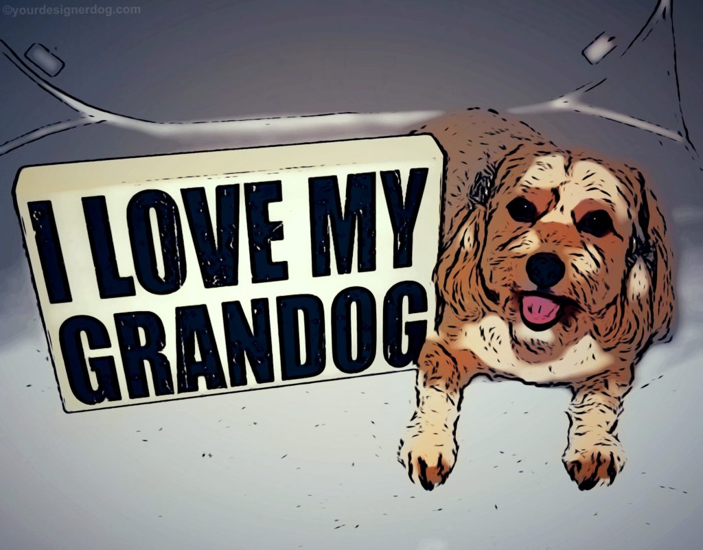 dogs, designer dogs, yorkipoo, yorkie poo, grandog, grandparent's day, pet portrait, digital art, cartoon