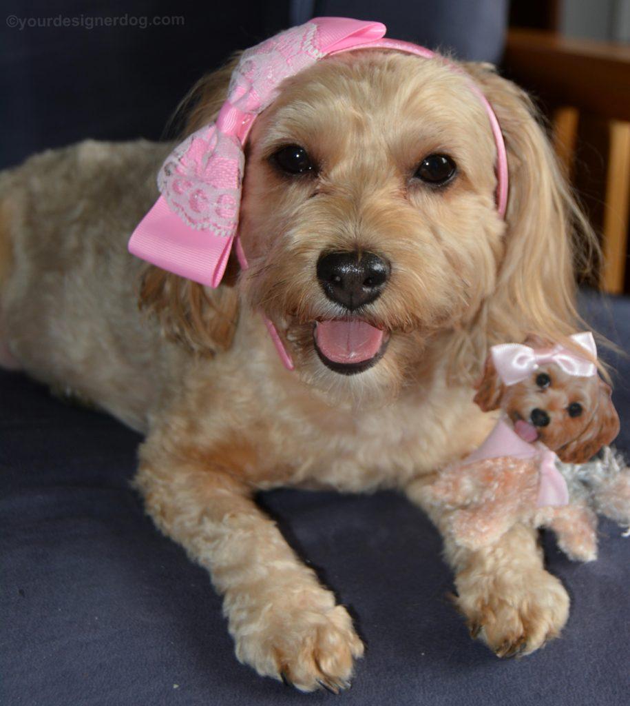 dogs, designer dogs, Yorkipoo, yorkie poo, mini Sadie, plushie