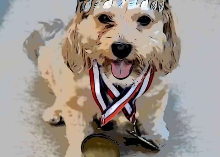 dogs, designer dogs, Yorkipoo, yorkie poo, digital art, gold medal, crown, victory