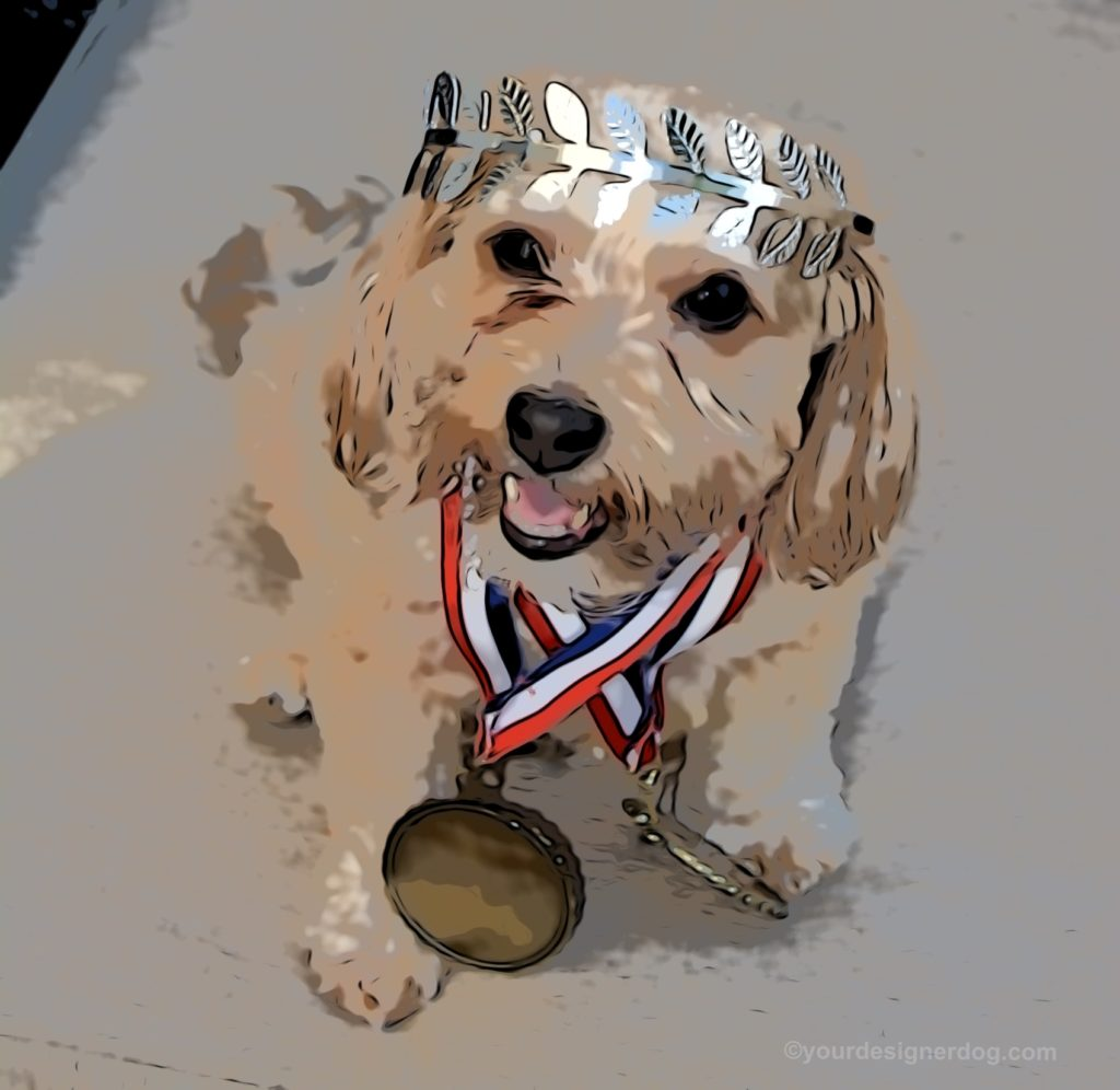 dogs, designer dogs, Yorkipoo, yorkie poo, digital art, gold medal, crown, victory