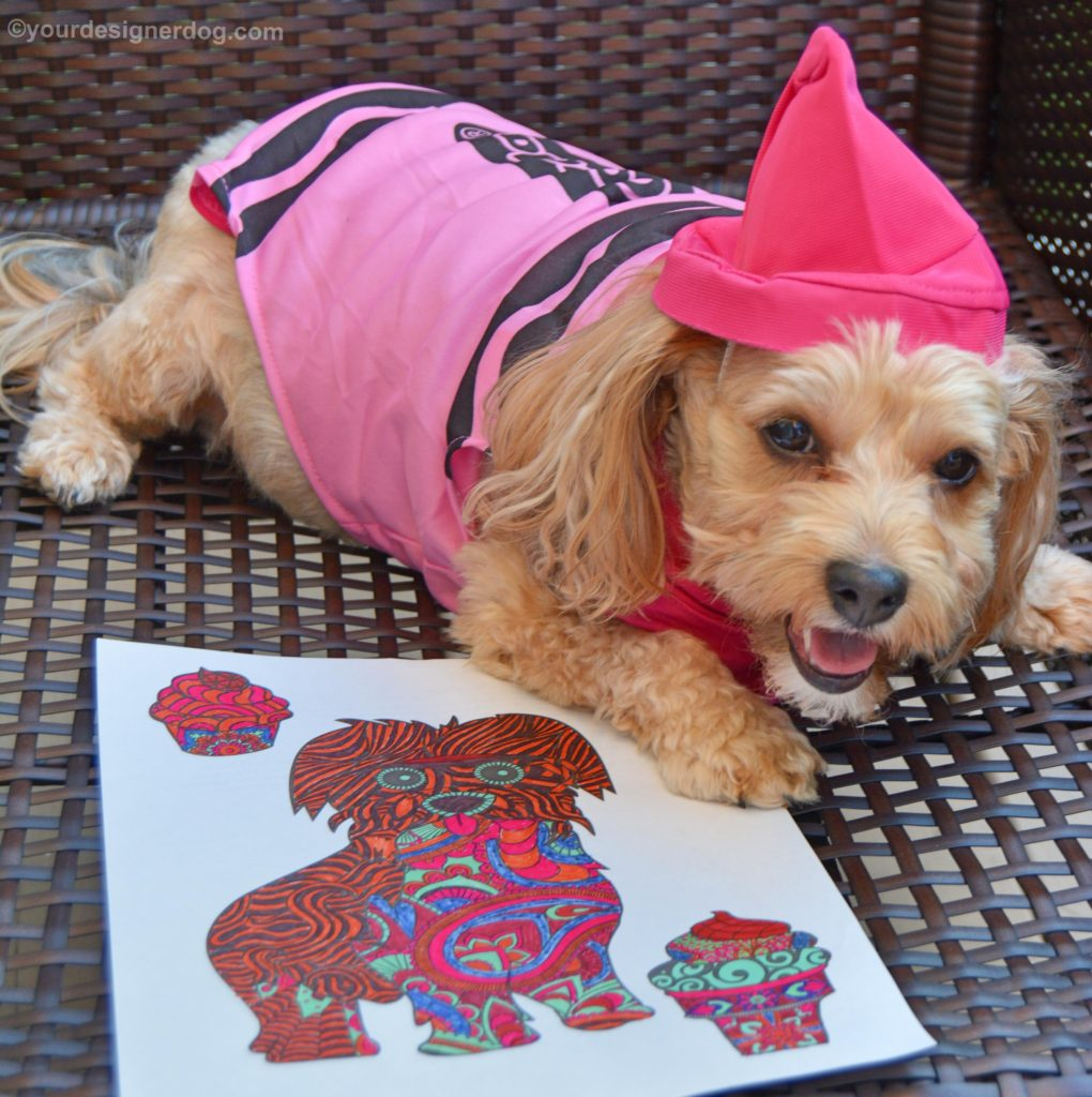 Coloring pictures yorkies - View Ad Yorkie Poo Puppy Florida Naples