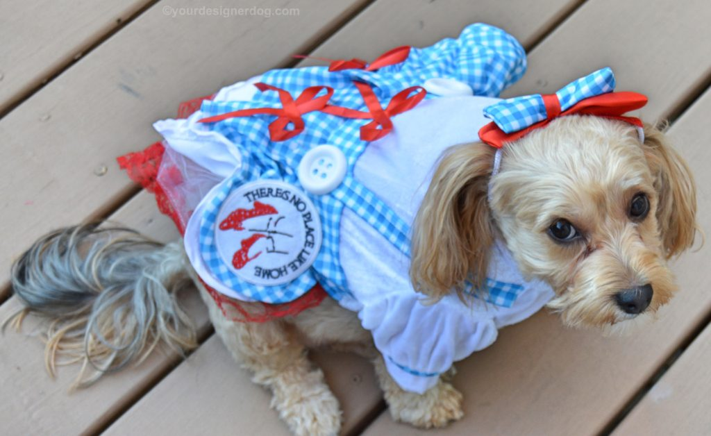 Dorothy From The Wizard Of Oz Yourdesignerdog : wizard of oz dog costume  - Germanpascual.Com