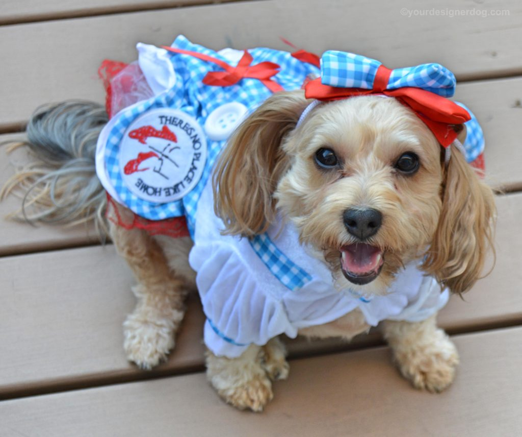 Dorothy from The Wizard of Oz - YourDesignerDog