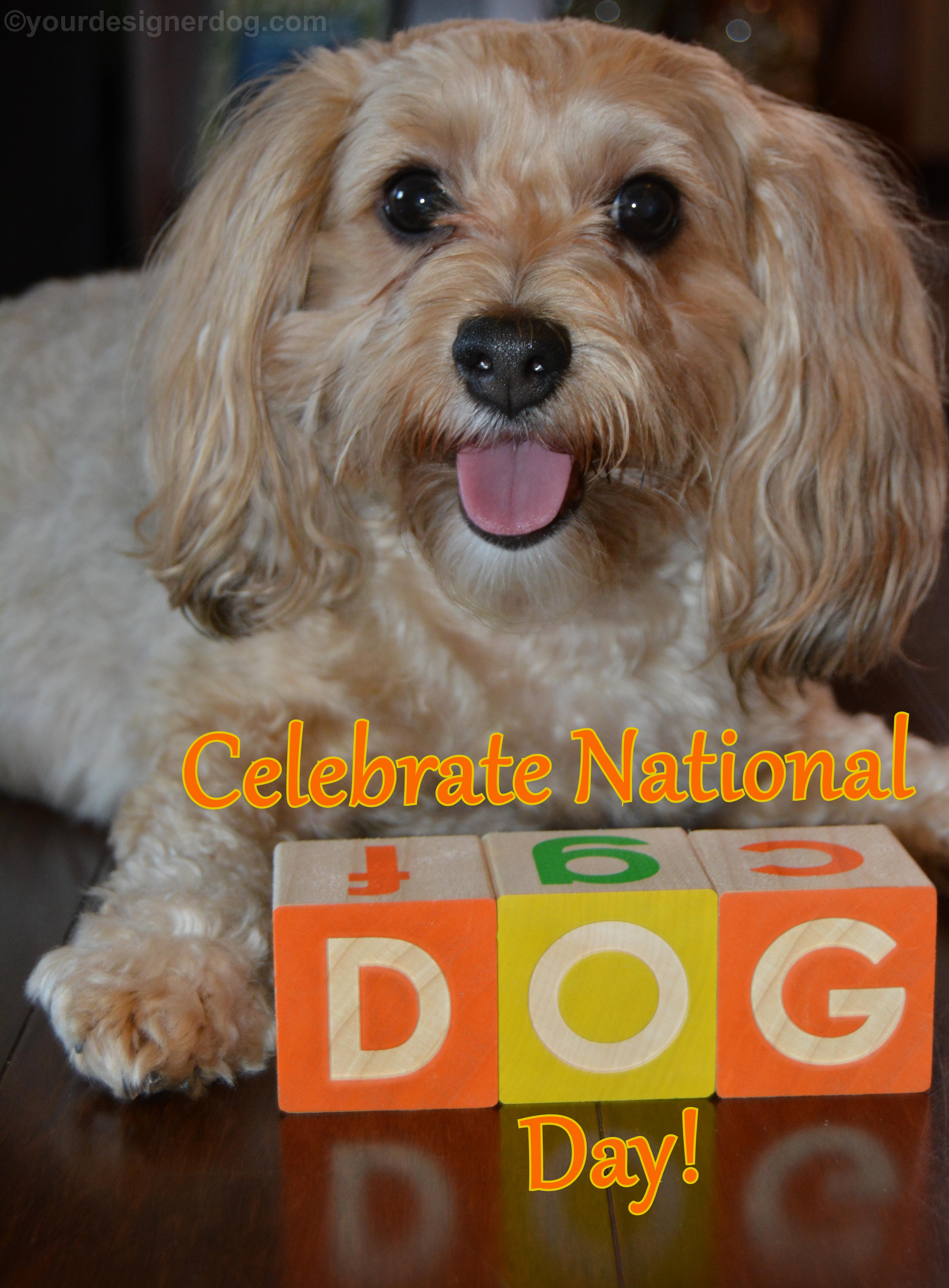 Celebrate National Dog Day!