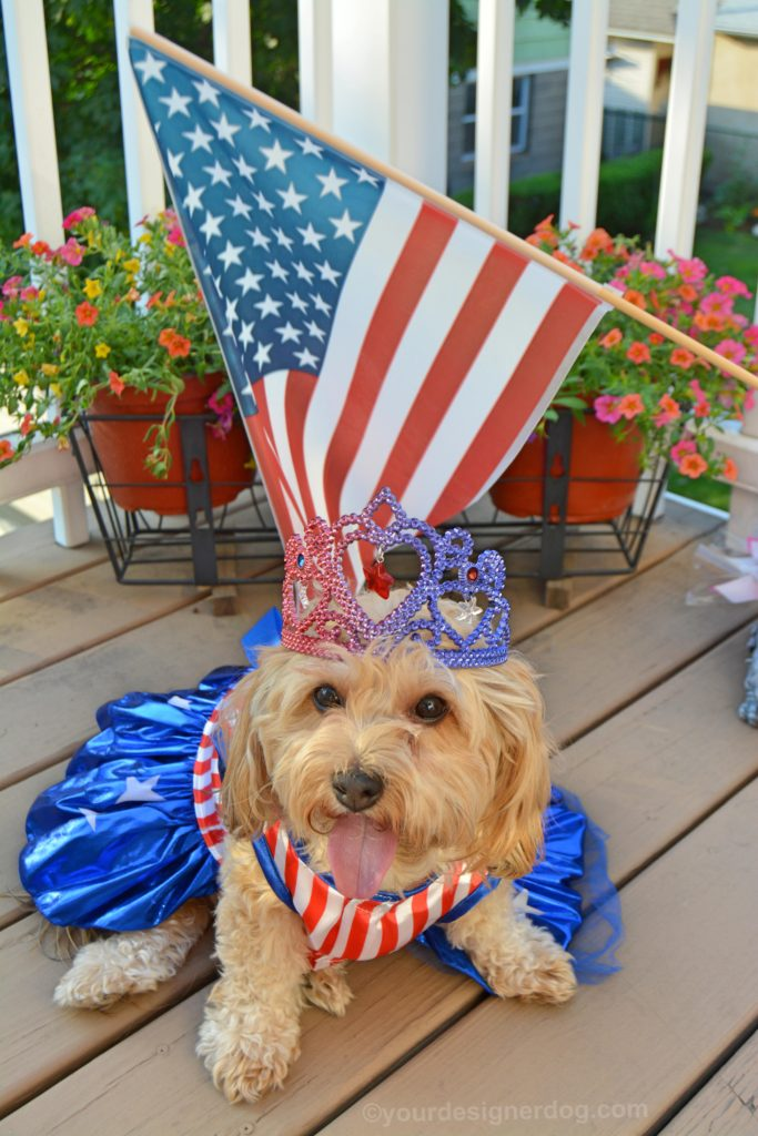 dogs, designer dogs, Yorkipoo, yorkie poo, patriotic, american flag, tiara, dog dress