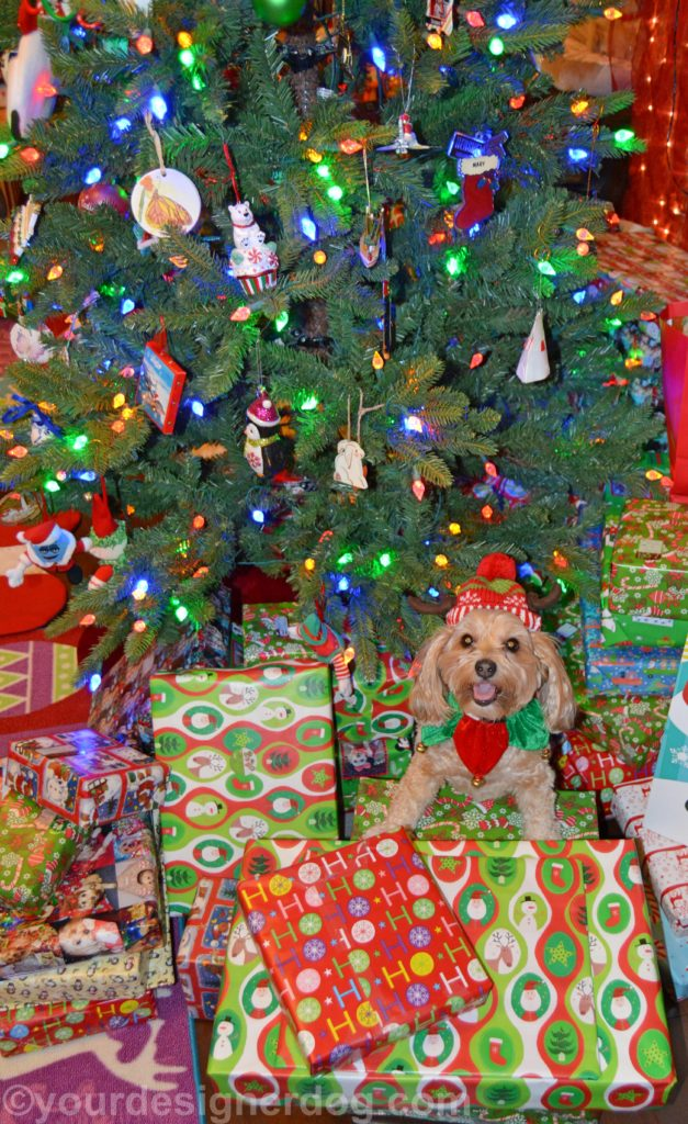 dogs, designer dogs, Yorkipoo, yorkie poo, christmas tree, christmas presents, elf