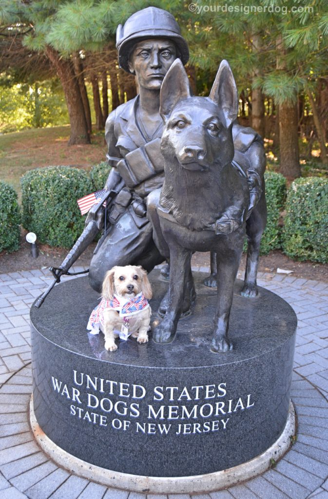 dogs, designer dogs, Yorkipoo, yorkie poo, memorial, statue, war dogs