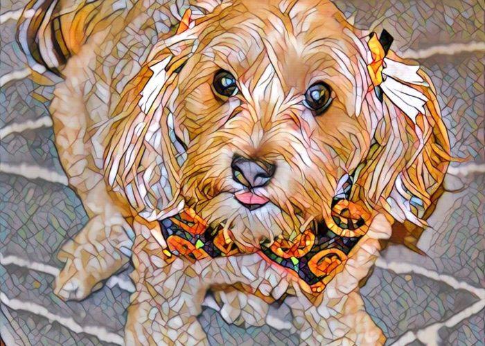 dogs, designer dogs, Yorkipoo, yorkie poo, digital art, pet portrait, halloween, jack-o-lantern