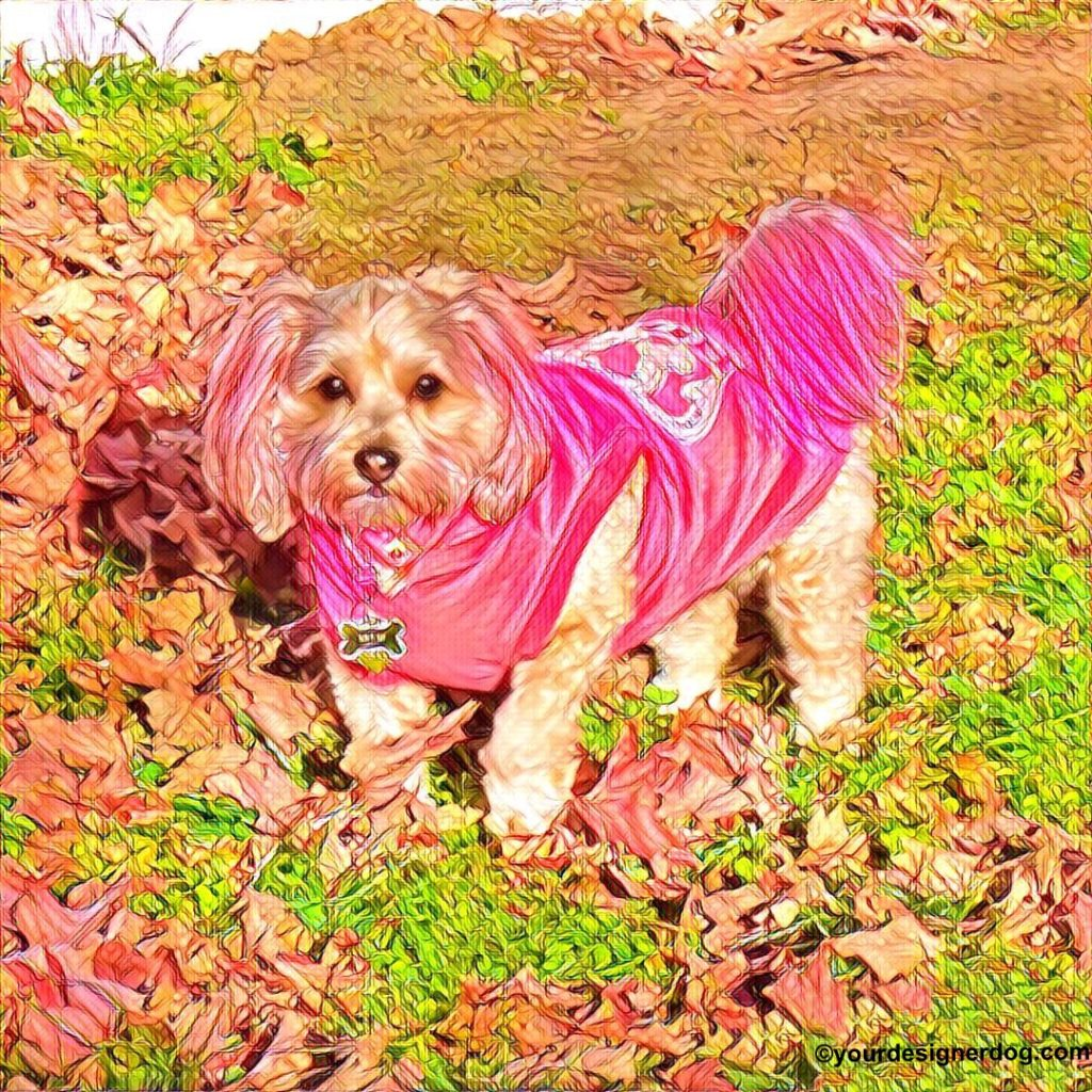 dogs, designer dogs, Yorkipoo, yorkie poo, digital art, pet portrait, punk rock, pink hair