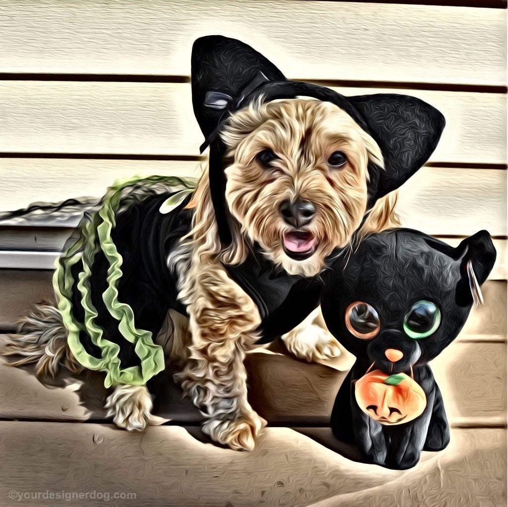 dogs, designer dogs, Yorkipoo, yorkie poo, black cat, dog costume, halloween, digital art, pet portrait