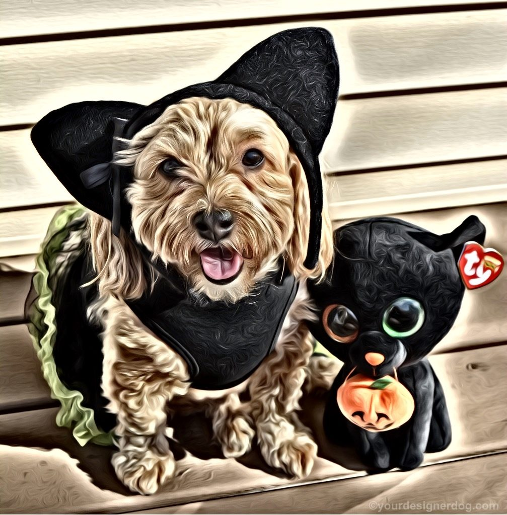 dogs, designer dogs, Yorkipoo, yorkie poo, black cat, dog costume, halloween, digital art, pet portrait
