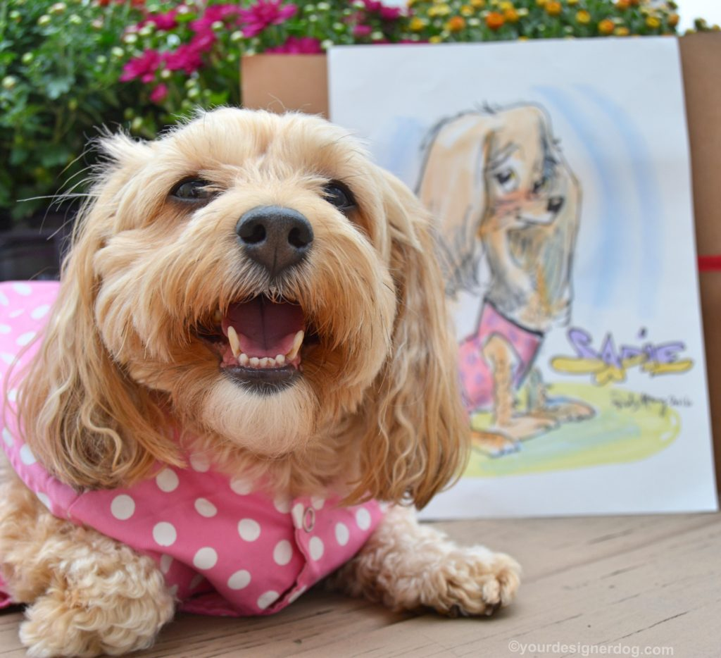 dogs, designer dogs, Yorkipoo, yorkie poo, pet portrait, caricature, cartoon, caturday art