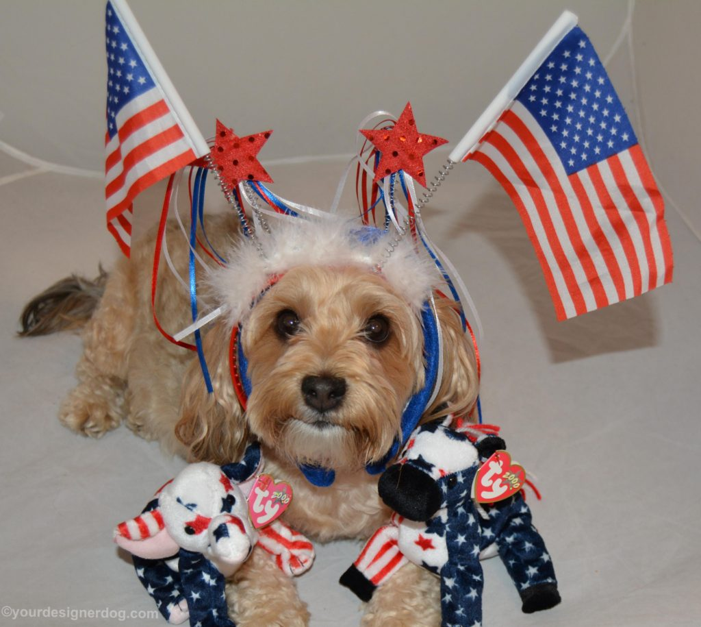 dogs, designer dogs, Yorkipoo, yorkie poo, patriotic, USA, election, american flag