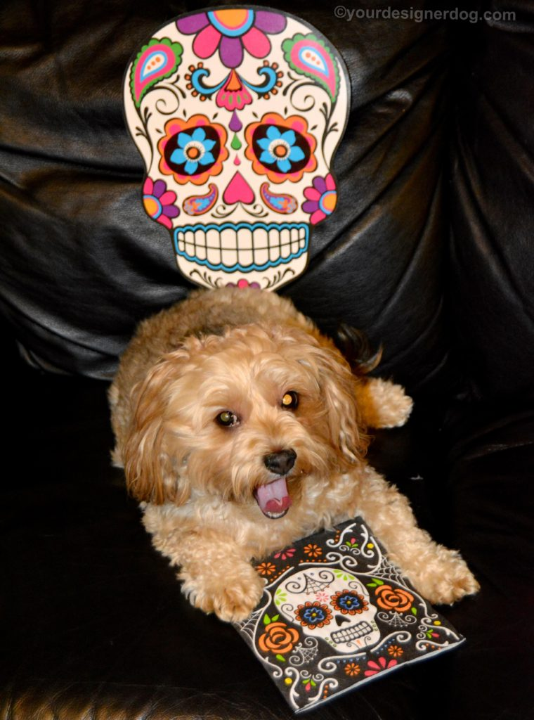 dogs, designer dogs, Yorkipoo, yorkie poo, sugar skulls, day of the dead, tongue out
