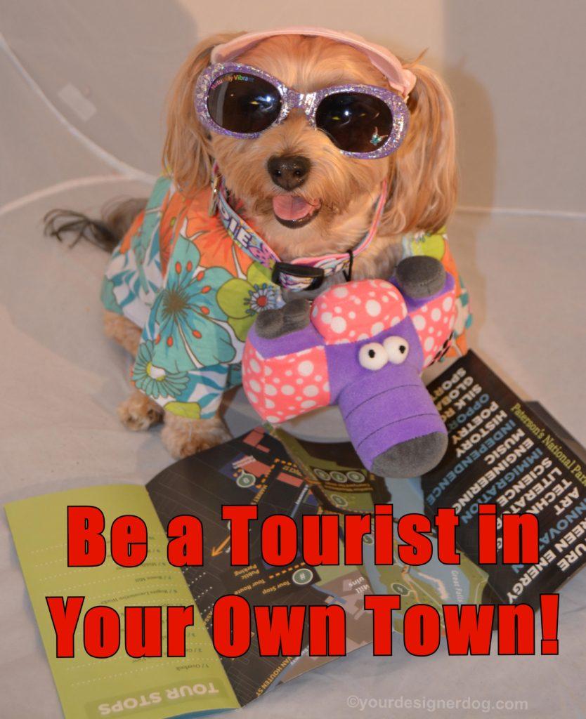 dogs, designer dogs, Yorkipoo, yorkie poo, tourist, tacky, camera, sunglasses