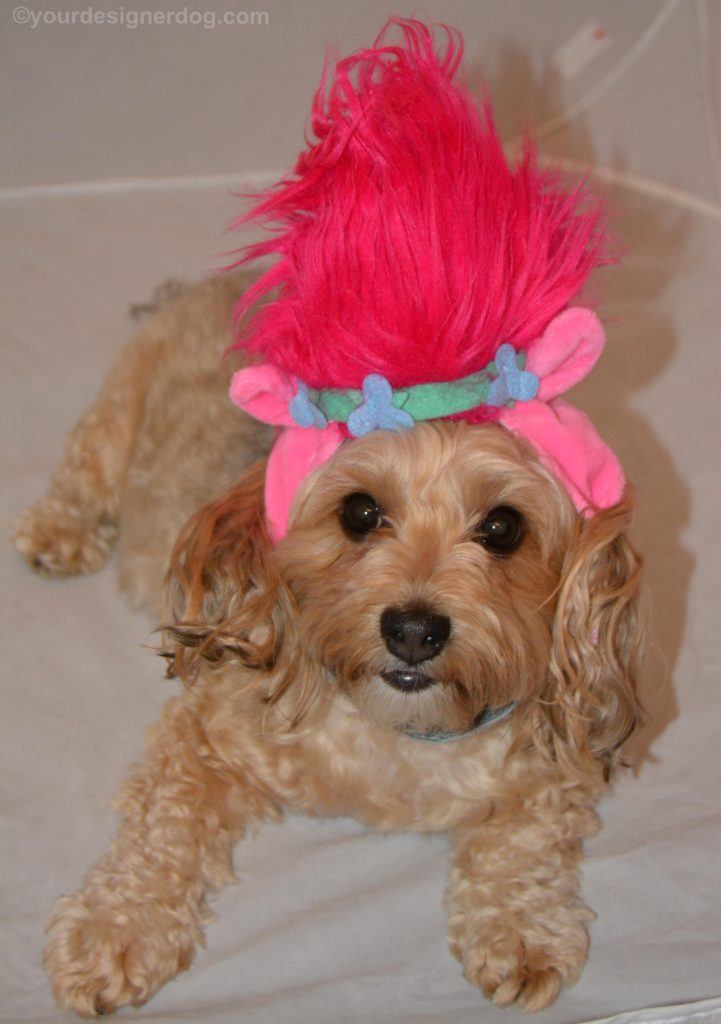 dogs, designer dogs, Yorkipoo, yorkie poo, trolls, dog costume, pink hair