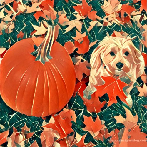dogs, designer dogs, Yorkipoo, yorkie poo, pumpkin, leaves, fall, pet portrait, digital art